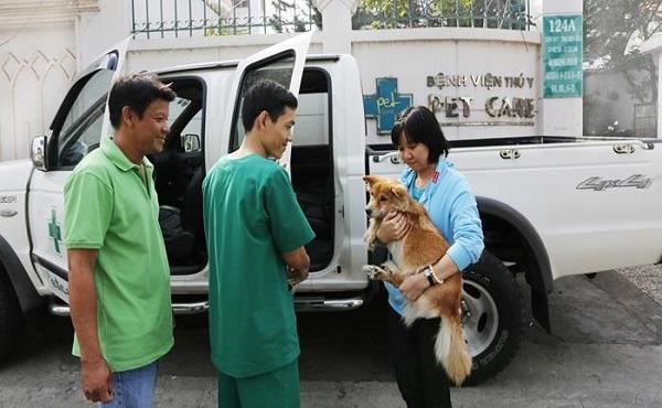 Phòng khám thú y Hà Nội Petcare